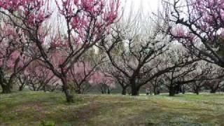 トワ・エ・モワ - 早春賦