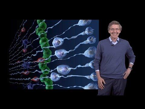 Arnold Kriegstein (UCSF) 1: Outer Subventricular Zone Radial Glia Cells - Brain Development