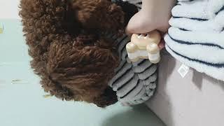 [개봄] 장난감 뺏어가는 양아치 강아지