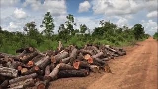 Tin Tức 24h Mới Nhất Hôm Nay : điểm tập thể, cá nhân vụ khai thác gỗ trái phép tại Đác Lắc