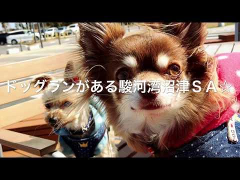 ドッグランがある駿河湾沼津SA☆
