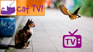 Tv For Cats Combined with Classical Music for Cats - Engaging Visuals for Cats - Bird Watching ep. 2