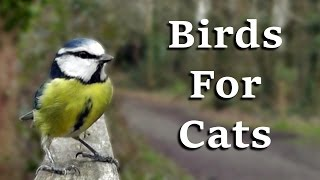 Videos For Cats To Watch - AWESOME One Hour of Birds Coming and Going