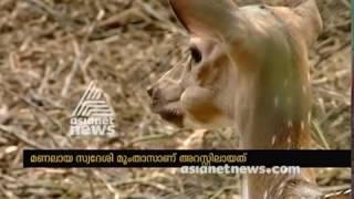 Women Arrested After Keeping Deer in Home | മലപ്പുറത്ത് പ്രവാസി വ്യവസായിയുടെ ഭാര്യ റിമാന്ഡില്