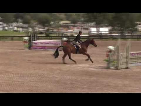 Video of Danturano ridden by SARAH BARGE from ShowNet!