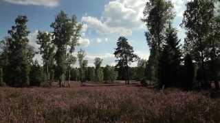 Umgebung vom Campingplatz Auf dem Simpel in Soltau