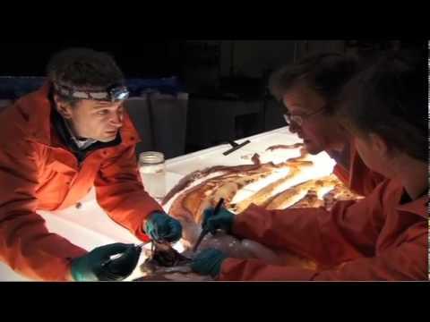 Inside Nature S Giants Squid Youtube