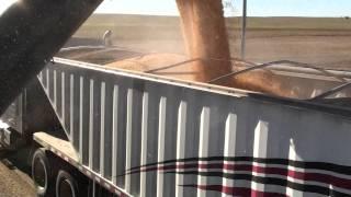 Balzer grain cart unlaoding