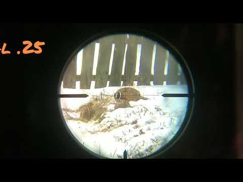 Охота на фазана с PCP винтовкой саl 25 (6.35)мм