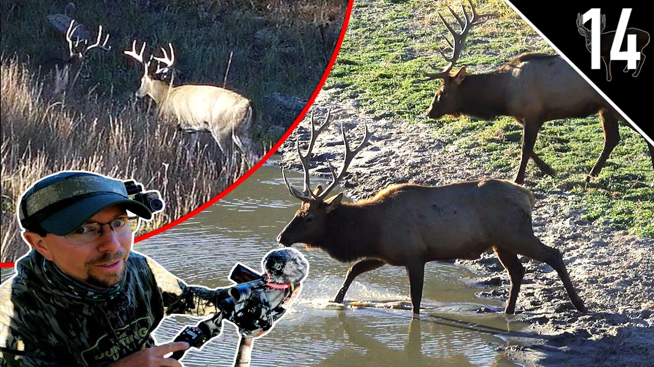 Download SOUTH DAKOTA BUCKS and BULLS! (AWESOME Elk Encounter!) | What Are These Deer Eating?