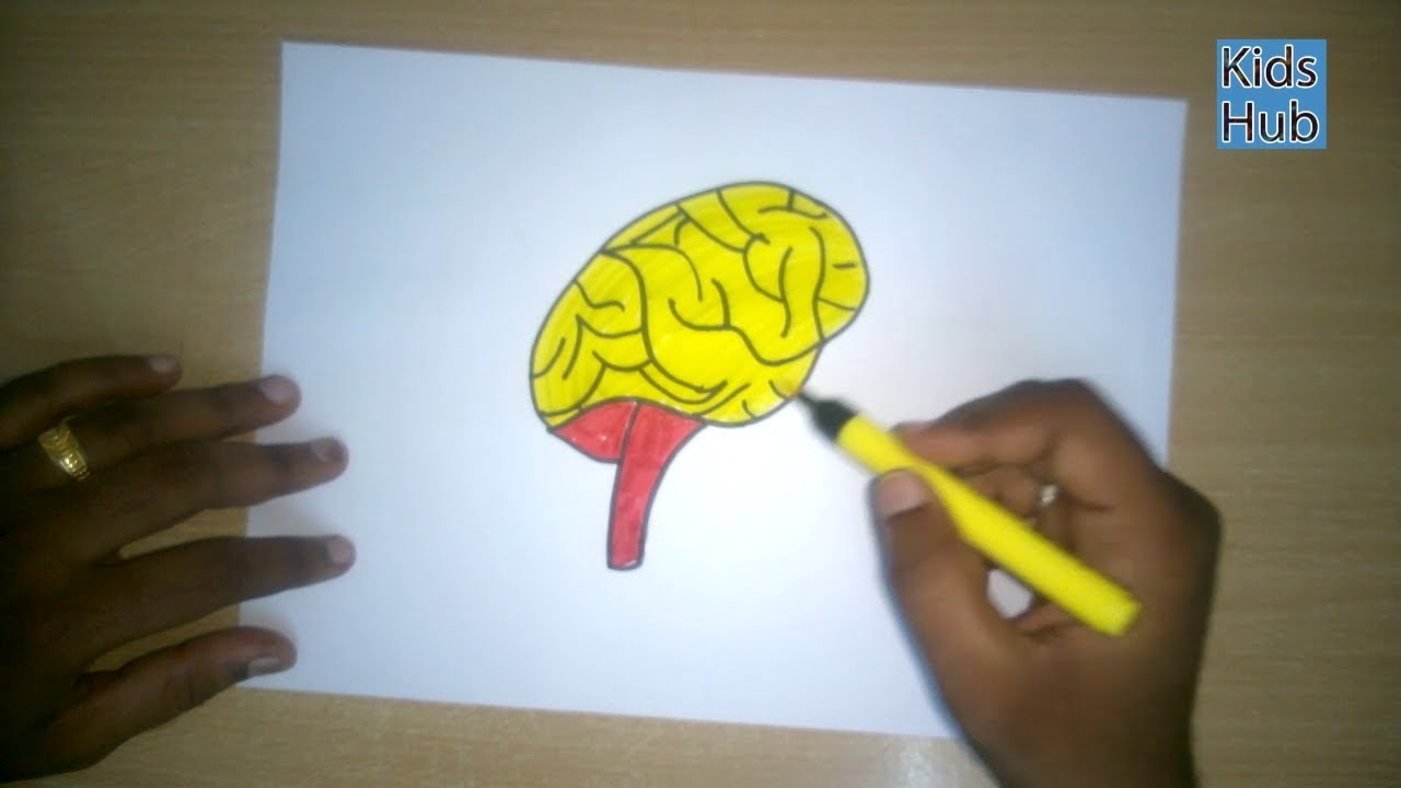 How to draw a Brain | parts of the inner body | Easy step ...