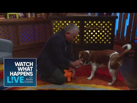 EXCLUSIVE: Cesar Millan Teaches Andy and Wacha New Tricks | WWHL