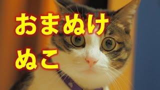 【おもしろ動物ハプニング映像】海外サイトの犬猫もふもふ動画Part8全部...