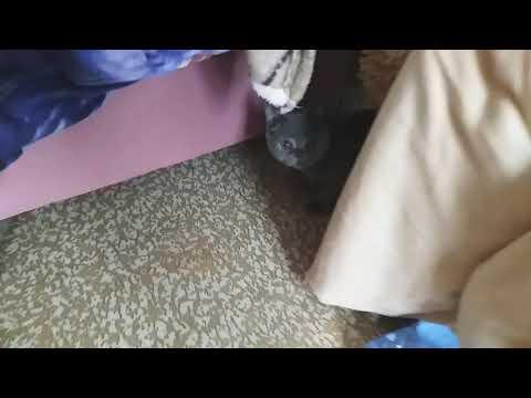 Кот Бантик играет, а кот Марсик спит или спал, уже проснулся.. 16.10.2019 ЯНАО