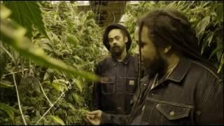 Damian 'Jr.  Gong' Marley ft. Stephen 'Ragga' Marley - Medication - Stafaband