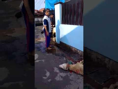 kurban kambing gang Gaber