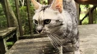 ベンチに座っていた野良猫にそ~っと近づいてみたら thumbnail