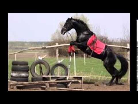 Pferde springen ♥ Fliegen ohne Flügel - YouTube