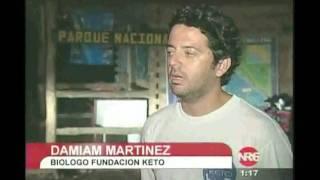 Ballena Bryde en Costa Rica Fundacion Keto