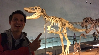 World's Best Dinosaur Museum