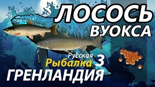 Лосось Вуокса Качаемся с 18 до 30 разряда / РР3 [Русская Рыбалка 3 Гренландия].