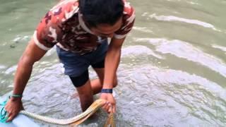 Taikong kuda laut menjala udang
