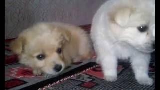 Красивые маленькие собачки / Beautiful small dogs