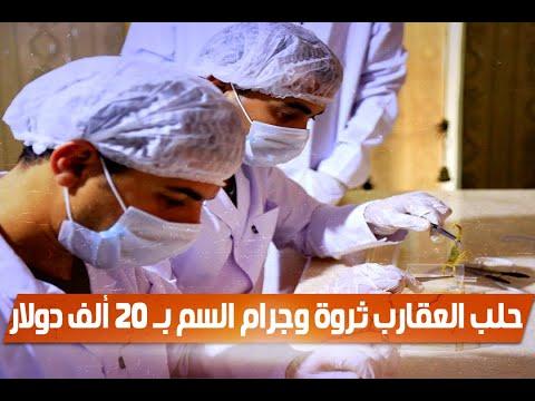 تجارة الذهب السائل فى مصر.. حلب العقارب ثروة وجرام السم بـ 20 ألف دولار  - 12:54-2019 / 7 / 12