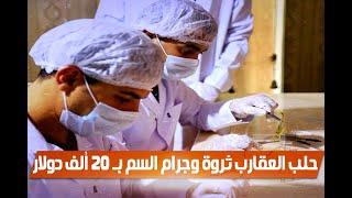 تجارة الذهب السائل فى مصر.. حلب العقارب ثروة وجرام السم بـ 20 ألف دولار