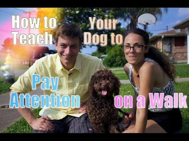 How to STOP Leash Pulling: TEACH Your DOG To WALK PERFECT on a Leash