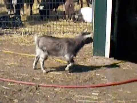 Call 815-600-6464 / Funny Animal Video,Goofy Animals,Animal Tricks,Best Video Ever,Amazing Animals!