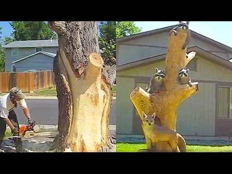 Logger turns tree trunk into spectacular animal sculpture youtube