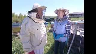 Капельный полив и азы пчеловодства.
