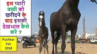 20 दिन  की बछेरी की देखभाल How To Care Of Young Filly : Horse Care Information