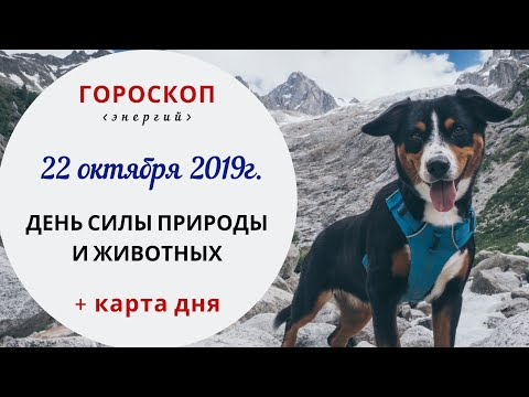 День силы природа и животных   Гороскоп  22 октября 2019