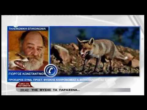 Αλεπού - Τομές στα Γεγονότα - SIGMA TV ΔΕΛΤΙΟ ΕΙΔΗΣΕΩΝ -  NEWS 29/7/2016 - Video