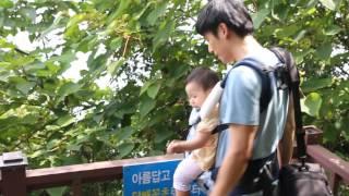 [D+255] 에끌레브 힙시트 아기띠 첫 앞보기~♥