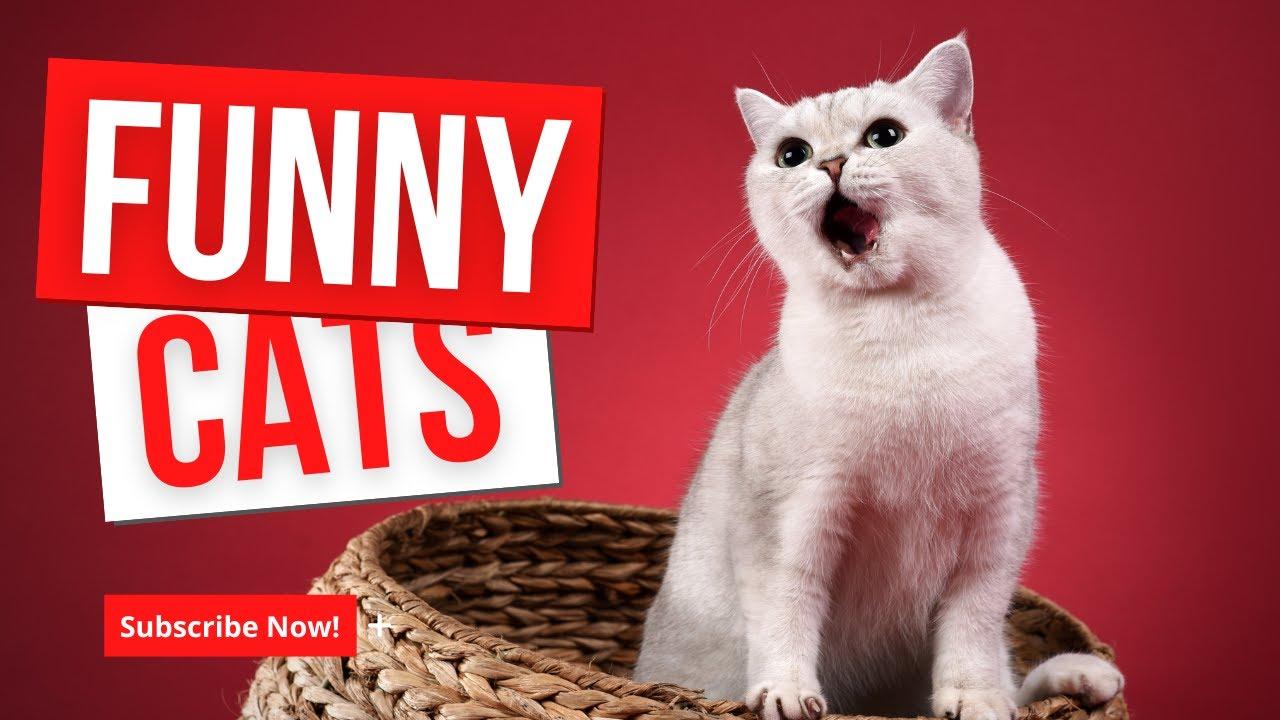 Смешные говорящие кошки и коты