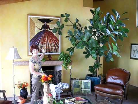 Fig Tree: How to Care for Indoor Plants - YouTube