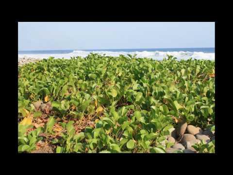 El Salvador Photo Album 2