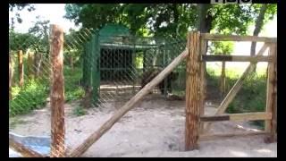 Райский сад в Жировичах(Жировичский монастырь продолжает наполнение зоосада, в котором уже поселились косули, ослики, медведь,..., 2012-07-01T18:53:44.000Z)