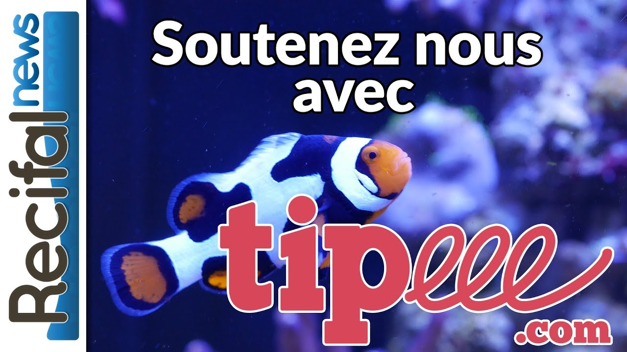 Soutenez Récifal News : Tipeee