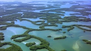 Seagrasses And Mangroves - Full Episode