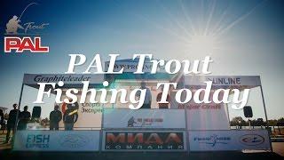 PAL Trout 2016. Весенний турнир - Fishing Today