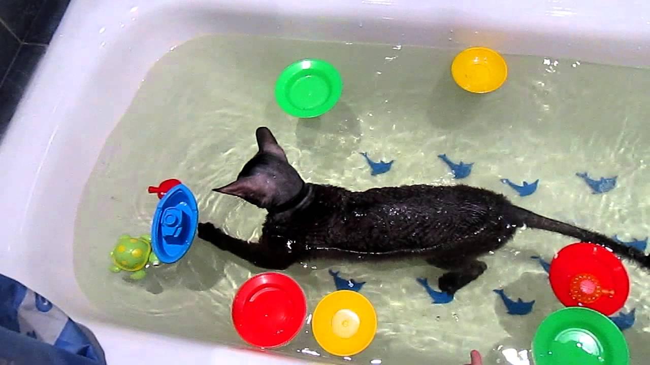 Играть в кота в ванной