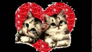 Самые милые котята