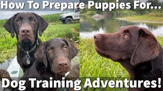How Uncle Stonnie Prepares Puppies For Dog Training Adventures!