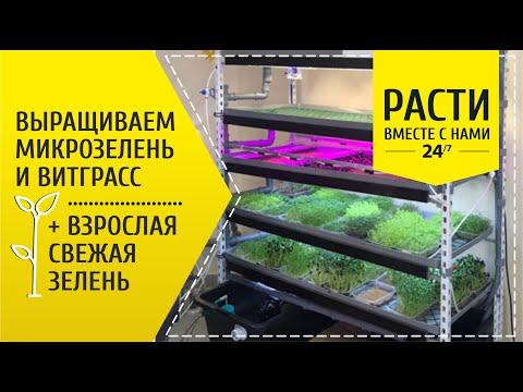 Ферма для выращивания микрозелени, витграсс, взрослой свежей зелени | СЕЕМ СЕМЕНА | гидропоника
