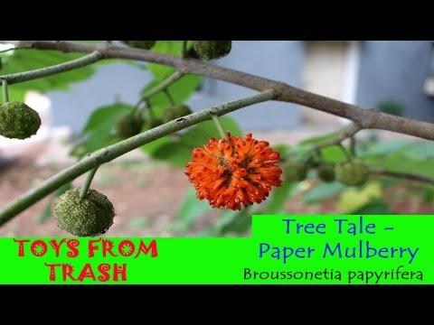 Tree Tale Paper Mulberry | Kannada