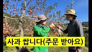 (완판!! 고맙습니다)사과 싸게 사먹을 찬스입니다. 많…